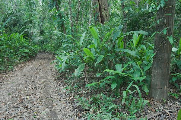 Rainforest trail, Carara Biological Reserve, Central Pacific Coast, Costa Rica, Central America, December 2006