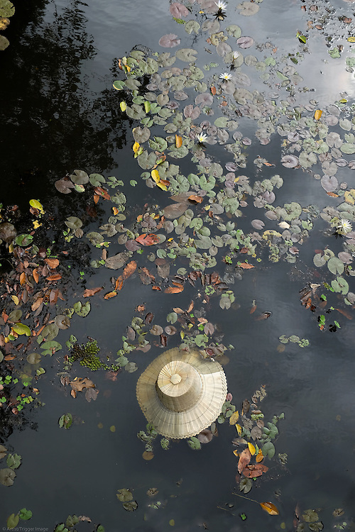 A straw hat floats in a pond amid fallen flowers and leaves