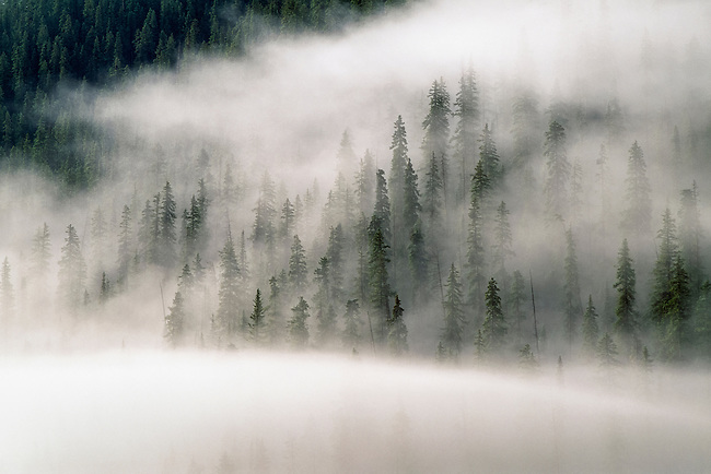 Fog and clouds created by a summer storm fills a forest of spruce and fir trees, San Juan Nat'l Forest, Colorado Rocky Mountains, USA