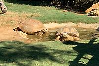 Schildkröten im Vergüngungspark Zoomarine - 25.09.2019: Zoomarine Park, Guia, Albufeira an der Algarve