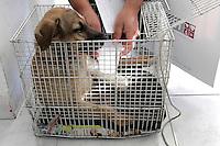 SÃO PAULO,SP,26 JULHO 2012 - HOSPITAL PUBLICO VETERINARIO <br /> Foi inaugurado no ultimo dia 02 o primeiro hospital público para animais do País, no Tatuapé (zona leste),  o local já vive rotina de sala de espera cheia e senhas que acabam em poucas horas. A unidade tem atendido cerca de 70 animais/dia.FOTO ALE VIANNA-BRAZILPHOTO PRESS.