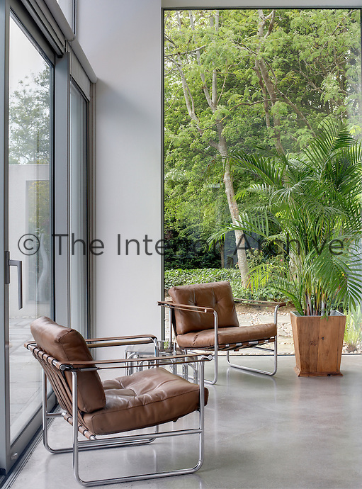 A glass wall brings the garden into the house where a pair of vintage leather armchairs has been arranged next to a potted palm tree