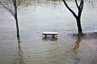 panchina e alberi in mezzo all'acqua, bench and trees in the water,banc et arbres dans l'eau