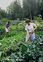 HS18-107x  Working in vegetable garden