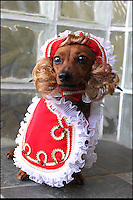 BNPS.co.uk (01202 558833)<br /> Pic: Cushzilla/BNPS<br /> <br /> ***Please use full byline***<br /> <br /> Prince Charming outfit.<br /> <br /> A barking-mad designer has launched a range of wigs that turn pets into pop princesses including Katy Perry, Lady Gaga, Britney Spears and even Dolly Parton.<br /> <br /> Dogs and cats can also be dressed up as dragons, pilots, wizards or Prince Charming thanks to Leah Workman's wacky creations.<br /> <br /> The 40-year-old from Los Angeles spotted the trend of dressing up pets while studying in Japan - and later teamed up with husband Hiroshi Hibino to launch company Cushzilla.<br /> <br /> The pair instantly set tails wagging around the internet with their bonkers brand of pet fashion, which also features Sharon Osbourne and Sid Vicious wigs and cow and tiger costumes.<br /> <br /> Leah imports the high quality handmade wigs while costumes come from famous Japanese pet clothing designer Takako Iwasa.<br /> <br /> She says the most popular wig is the Lady Gaga, while the pilot's outfit tops the popularity charts in the costume department.<br /> <br /> Her own cats Jitters and Justus model many of the products on the company's website.