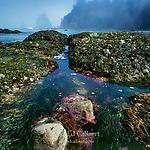 Tidepool, Sea Stars, Ozette Beach, Olympic National Park, Washington
