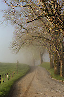 Early morning view of Sparks Lane, Cades Cove, Great Smoky Mountains National Park, Tennessee