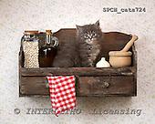 Xavier, ANIMALS, cats, photos+++++,SPCHCATS724,#a# Katzen, gatos