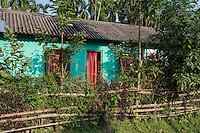 India – West Bengal: A worker's house in Pakka Line, one of the villages dotting the Mogulkata Tea Estate, in the Dooars region. Houses provided by the company are more than 50-year-old and rarely mended. They lack windows, toilets and sewage system and they often leak if it rains.