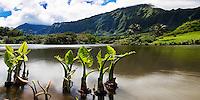 A peaceful day along a lake, with the Ko'olau mountains in the distance, Kane'ohe, Windward O'ahu.