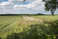 In field buffer strip - Norfolk, June