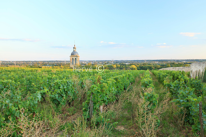 France, Indre-et-Loire (37), Vouvray, le vignoble (AOC) et le clocher de l'église // France, Indre et Loire , Vouvray, the vineyard and the church tower
