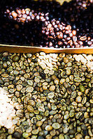 Closeup Picture of Coffee Beans at a Coffee Plantation on Bali, Indonesia