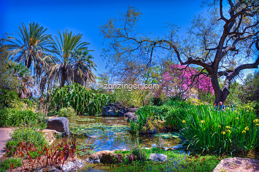 LA, Arboretum, Garden, flowers, grow, mixed, flora, botanic, colorful, blooming, spring, garden, horticulture