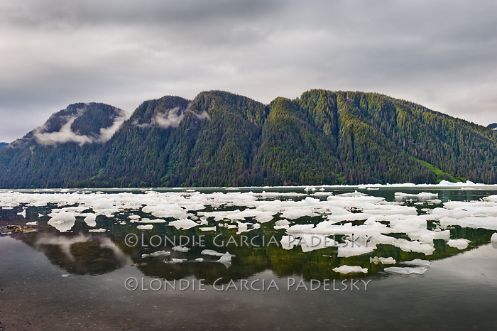 Floating icebergs, Stikine-LeConte Wilderness, Tongass National Forest, Southeast, Alaska, USA