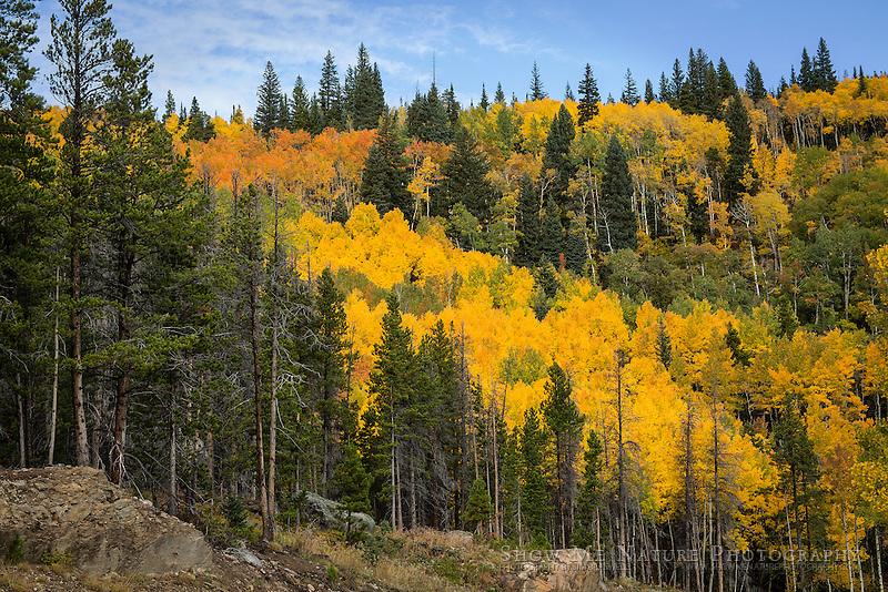 Fall colors along Bear Lake Road