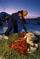 An Iditarod musher feeds and warms her sled dogs at a checkpoint. Alaska.