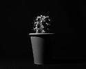 Edinburgh, UK. 24.12.2019. Cactus in green pot on black background. Photograph © Jane Hobson.