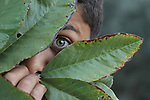 A green eye spying behind green leaves. Photo by Sanad Ltefa