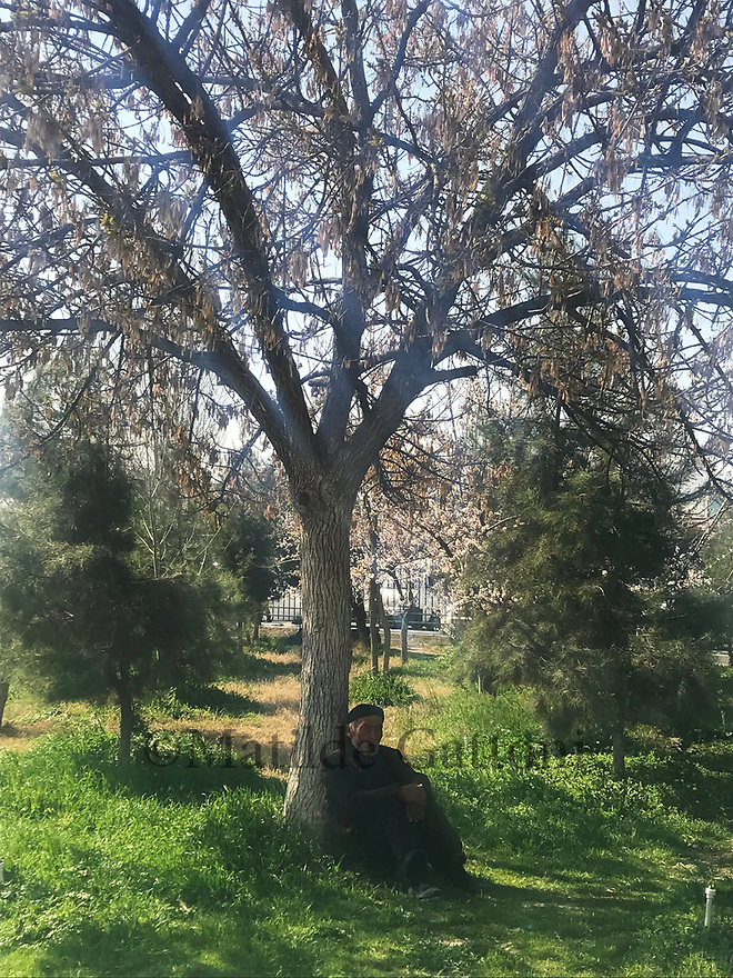 Uzbekistan - Tashkent - An old man sits in the shade of a tree on a warm Spring day.