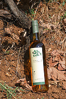 Bottle of Gangas Travarica herb spiced alcohol. By the foot of a vine in the vineyard. Vita@I Vitaai Vitai Gangas Winery, Citluk, near Mostar. Federation Bosne i Hercegovine. Bosnia Herzegovina, Europe.