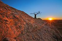 Rhodes' Baobab