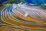 Colourful rice fields by Khanh Phan