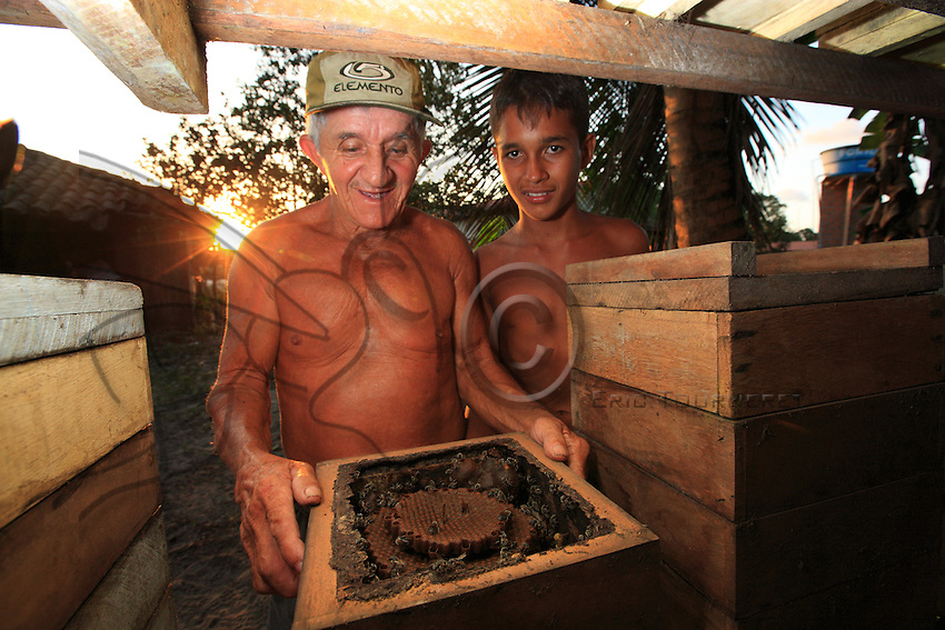 Brazil, State of Pará, near Bragança. Mr. Roque, 68 years old, beekeeping farmer, keeps twenty-odd hives of Melipona fasciculata bees. Here with his grandson José in front of an open hive. This specie is aboutof the same size as the Western honeybee, but black with white stripes.