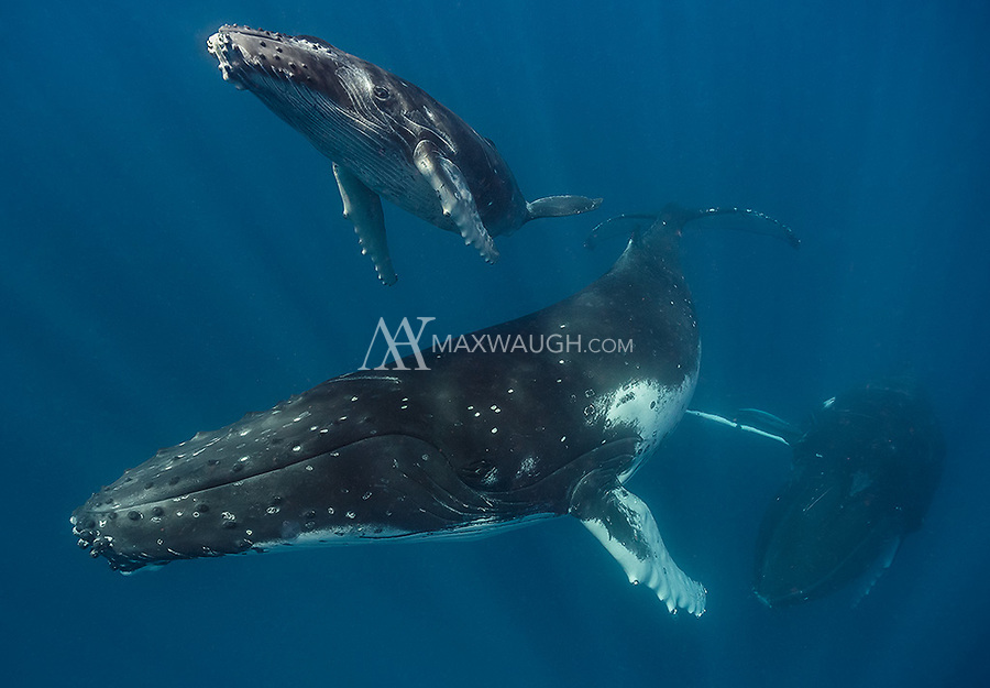 Our best whale calf encounters occurred on our very first day.