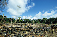 BRAZIL, Amazon, destroyed rainforest at river Jurua / BRASILIEN Amazonas, abgeholzter Regenwald am Fluss Jurua