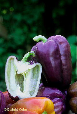 HS41-113x  Pepper - sweet bell pepper, Islander variety