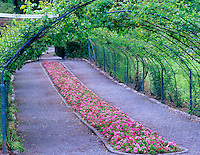 Impatiens lined path into rose garden at Point Defiance Park. Tacoma, Washington