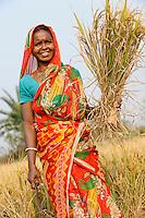 INDIA West Bengal, Dalit woman harvest rice for community rice bank in village Kustora / INDIEN Westbengalen , Dorf Kustora , Reisernte , Dalit Frauen betreiben gemeinsam eine Reisbank zur Ueberbrueckung von Ernteausfaellen und bei Nahrungsverknappung , gefoerdert durch LWS Indien, Frau Karuna Buri