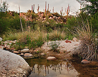 A stream still runs in high summer along the Canyon Loop of Catalina State Park, north of Tucson, Arizona.