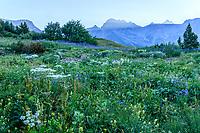 France, Hautes-Alpes (05), Villar-d'Arène, jardin alpin du Lautaret, prairie avec flore locale et le massif du Grand Galibier en fond, le matin