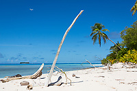 The bleached trucks of dead trees in the Funafuti atoll, Tuvalu. Erosion of land is an inevitable consequence of life in a coral atoll nation. As sea levels rise and increased threats from storm surges and extreme weather events occur, the land of Tuvalu will increasingly become fragile and prone to erosion. March, 2019.