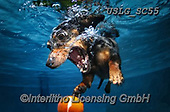 REALISTIC ANIMALS, REALISTISCHE TIERE, ANIMALES REALISTICOS, dogs, paintings+++++SethC_RHODA_WATER_JPG_GARY,USLGSC55,#A#, EVERYDAY ,underwater dogs,photos,fotos ,Seth