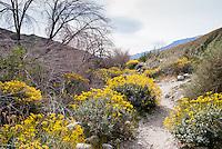 California Deserts