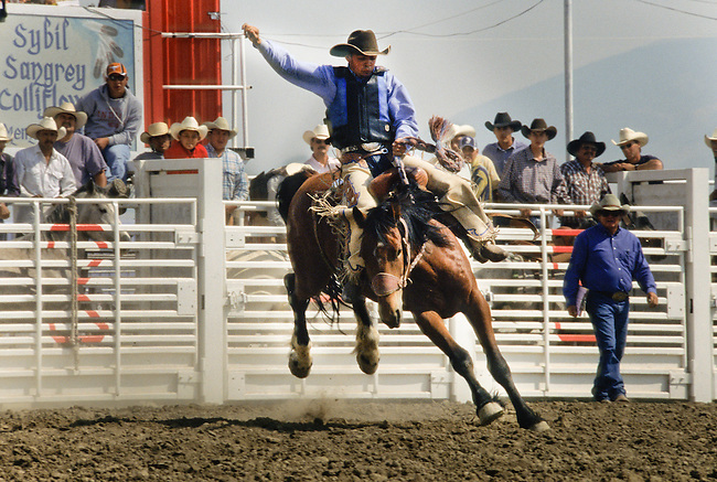 Saddle bronc rider attends the all-Indian Sybil Sangrey Colliflower Memorial Rodeo on the Rocky Boy Reservation, home to the Chippewa-Cree Indians.