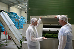 POLAND, Rusiec, herb and spices cultivation, processing and trade, drying of dill weed / POLEN, Rusiec, Firma Bromex, Vertragsanbau, Verarbeitung und Handel von Kräutern und Gewuerzen, Trocknung von frisch geerntetem Dill