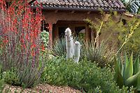 Selenicereus strausii 'Bogart's Form' (Silver Torch) Cactus with drought tolerant succulents flowering Aloe 'Blue Elf' in Schaff Garden