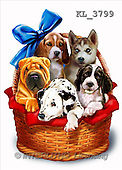 Interlitho, Lorenzo, REALISTIC ANIMALS, paintings, 5 dogs, basket(KL3799,#A#) realistische Tiere, realista, illustrations, pinturas ,puzzles