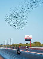 Oct 18, 2019; Ennis, TX, USA; Birds fly over NHRA pro stock motorcycle rider Jianna Salinas during qualifying for the Fall Nationals at the Texas Motorplex. Mandatory Credit: Mark J. Rebilas-USA TODAY Sports