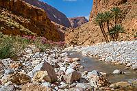 Todra Gorge, Morocco.