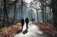 Nederland Schoorl - 2019 .  De Schoorlse Duinen.    Foto Berlinda van Dam / Hollandse Hoogte