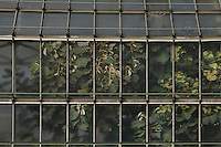 Tropical Rainforest Glasshouse (formerly Le Jardin d'Hiver or Winter Gardens), 1936, René Berger, Jardin des Plantes, Museum National d'Histoire Naturelle, Paris, France. Detail of windows of the glass and metal structure showing the luxuriant and invasive foliage within.
