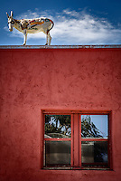 A sculpted burro atop a building in Carrizozo, New Mexico with reflections in the windows