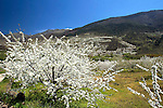 Spring landscape in the Jerte Valley. April 17 , 2013.(ALTERPHOTOS/Alconada)