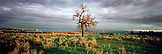 USA, Montana, wide open landscape and tree by the Bighorn River