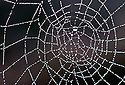 Spiderweb with raindrops